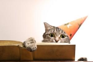 chat qui lit